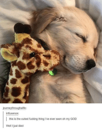 Fucking, God, and Oh My God: journeythroughalife:  influxence:  this is the cutest fucking thing I've ever seen oh my GOD  Well I just died
