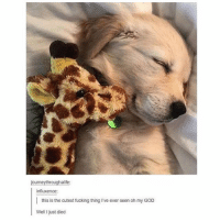 Fucking, God, and Oh My God: journeythroughalife:  influxence:  this is the cutest fucking thing I've ever seen oh my GOD  Well I just died cutie