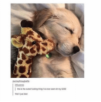 Love, Puppies, and Girl Memes: journeythroughalte  infuence:  I ths is the cutestfucking thing Ive ever seenoh my Goo  Well just ded I love puppies