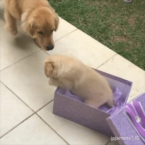 Oh hai mini me By jpjamess   IG  Join The Barked Club for more cute dog videos!: jpjamess   IG Oh hai mini me By jpjamess   IG  Join The Barked Club for more cute dog videos!
