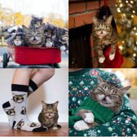 Lil BUB's BUBlack Friday sale is going strong at www.lilbub.com/store - use code GIFTOFBUB for 15% off your entire order.   As always, a portion of all proceeds benefit special needs pets.: Jr Lil BUB's BUBlack Friday sale is going strong at www.lilbub.com/store - use code GIFTOFBUB for 15% off your entire order.   As always, a portion of all proceeds benefit special needs pets.