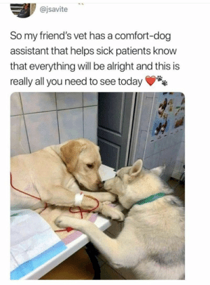 Animals, Cute, and Dogs: @jsavite  So my friend's vet has a comfort-dog  assistant that helps sick patients know  that everything will be alright and this is  really all you need to see today Everything you need for your cute fix of the day! #Memes #Animals #Dogs #Cute
