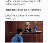 Memes, 🤖, and Frees: judge: you are being charged with  indecent exposure  defendant: dicks out for Harambe  judge: fuck, i miss him too. You're  free to go  rayfang Snapchat: dankmemesgang
