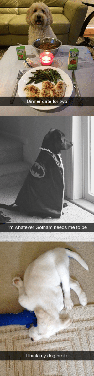 animalsnaps:Dog snaps: Juic  Juic  Juic  Apple  Dinner date for two   I'm whatever Gotham needs me to be   I think my dog broke animalsnaps:Dog snaps