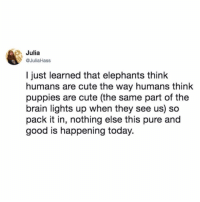 Cute, Memes, and Puppies: Julia  @JuliaHass  l just learned that elephants think  humans are cute the way humans think  puppies are cute (the same part of the  brain lights up when they see us) so  pack it in, nothing else this pure and  good is happening today. tag someone who needs this today :') (@juliahass on Twitter)