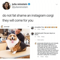 "Bitch, Corgi, and Funny: julia reinstein  @juliareinstein  do not fat shame an instagram corgi  they will come for you  . pcacorgis  circumflex Thicc  2d 1like Reply  stephonie-erin That poor dog is so  yobese.  1d 1 like Reply  Hide replies  pcacorgis @stephonie erin Actually  bitch, the healthy weight for an  adult male Corgi is 25-30 lbs and  he weighs 26. Go troll on someone  else's page and find something  better to do than hate on a precious  dog that looks better than you ever  will. @moffittier @brambi76 look at  this bitch calling Pax ""so obese.""  8h 7 likes Reply Lmao 😂 @unilad is hilarious"