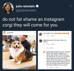"Random Thots: julia reinstein  @juliareinstein  do not fat shame an instagram  corgi they will come for you  pcacorgis  circumflex Thicc  1 like Reply  2d  stephonie_erin That poor dog is so  obese.  1d 1 like Reply  Hide replies  pcacorgis@stephonie_erin Actually  bitch, the healthy weight for an  adult male Corgi is 25-30 lbs and  he weighs 26. Go troll on someone  else's page and find something  better to do than hate on a precious  dog that looks better than you ever  will. @moffittier @brambi76 look at  this bitch calling Pax ""so obese.  7 likes Reply  8h Random Thots"