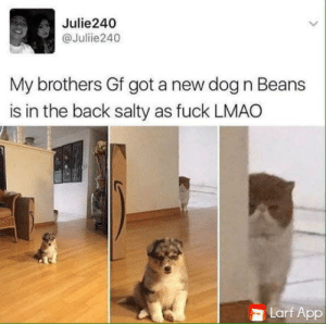 Lmao, Being Salty, and Fuck: Julie240  @Julie240  My brothers Gf got a new dog n Beans  is in the back salty as fuck LMAO  Larf App Not happy