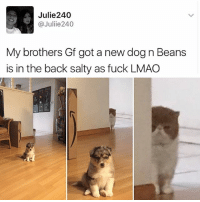 Beans is about to THROW DOWN!: Julie240  @Juliie 240  My brothers Gf got a new dog n Beans  is in the back salty as fuck LMAO Beans is about to THROW DOWN!
