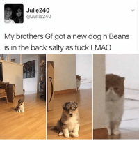 Animals, Cute, and Cute Animals: Julie240  @Juliie240  My brothers Gf got a new dog n Beans  is in the back salty as fuck LMAO SWIPE & TAG ❤️ follow me @v.cute.animals 👈👈