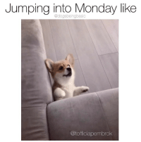 Memes, Monday, and Pup: Jumping into Monday like  @dogsbeingbasic  @tofficiapembrok Halp. Pup @tofficiapembrok