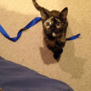 Hello, Love, and Target: jumpingjacktrash:  nerdii-panda:  xmasqueradeangelx:  buhguhz:  jeanroqueraltique:  my kitten says hello  WHAT WAS THAT  SOUND  I was not ready for this today…This is too much cuteness. I just..I can't even..  i just got kissed by a cat. through a screen. and i love it.  you really need to hit play you just really do
