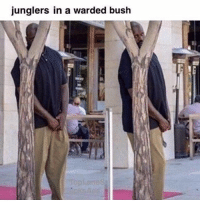 Anime, Asian, and Memes: junglers in a warded bush Junglers in a warded bush 😂 leagueoflegends leagueoflegend leagueoflegendsmemes leaguevines lolfam3 games riotgames asian drawing art artwork gamer gaming manga anime videogames lolfam1