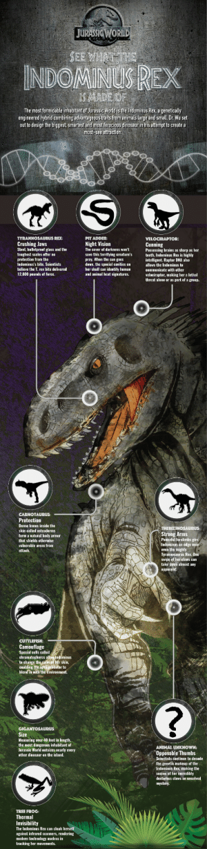 universalpichomeent:  See the Indominus Rex roar in Jurassic World now on Blu-ray, DVD & Digital HD. : JURASSICWORLD  SEE WHAT THE  INDOMINUS REX  IS MADE OF  The most formidable inhabitant of Jurassic World is the Indominus Rex, a genetically  engineered hybrid combining adyantageous traits from animals large and small. Dr. Wu set  out to design the biggest, smartest and most ferocious dinosaur in his attempt to create a  must-see attraction.   TYRANNOSAURUS REX:  PIT ADDER:  VELOCIRAPTOR:  Crushing Jaws  Steel, bulletproof glass and the  toughest scales offer no  protection from the  Indominus's bite. Scientists  Night Vision  Cunning  Possessing brains as sharp as her  teeth, Indominus Rex is highly  intelligent. Raptor DNA also  allows the Indominus to  The cover of darkness won't  save this terrifying creature's  prey. When the sun goes  down, the special cavities on  her skull can identify human  and animal heat signatures.  believe the T. rex bite delivered  communicate with other  12,800 pounds of force.  velociraptor, making her a lethal  threat alone or as part of a group.   CARNOTAURUS:  Protection  Dense bones inside the  THERIZINOSAURUS:  skin called osteoderms  Strong Arms  Powerful forelimbs give  Indominus an edge over  even the mighty  Tyrannosaurus Rex. One  swipe of her claws can  take down almost any  form a natural body armor  that shields otherwise  vulnerable areas from  attack.  opponent.  CUTTLEFISH:  Camouflage  Special cells called  chromatophores allow Indominus  to change the color of her skin,  enabling the apex predator to  blend in with the environment.   GIGANTOSAURUS:  Size  Measuring over 40 feet in length,  the most dangerous inhabitant of  Jurassic World outsizes nearly every  ANIMAL UNKNOWN:  Opposable Thumbs  Scientists continue to decode  the genetic makeup of the  Indominus Rex, making the  source of her incredibly  dexterous claws an unsolved  mystery.  other dinosaur on the island.  TREE FROG:  Thermal  Invisibility  The In