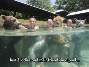srsfunny:Going For A Swim With Good Friends: Just 3 ladies and their friends in a pool.o srsfunny:Going For A Swim With Good Friends
