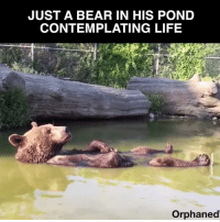 Memes, Bear, and Bears: JUST A BEAR IN HIS POND  CONTEMPLATING LIFE  Orphaned Please bear with me...
