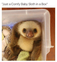 "Sloth: ""Just a Comfy Baby Sloth in a Box"""