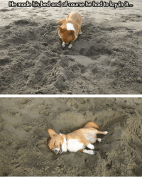 Corgi, Beach, and The Beach: Just a Corgi In The Beach