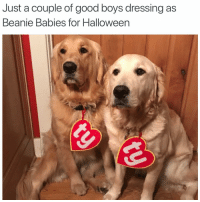 This is cute as heck: Just a couple of good boys dressing as  Beanie Babies for Halloween This is cute as heck