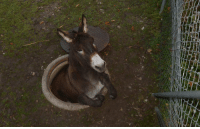 Just a donkey hanging out: Just a donkey hanging out