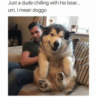 Dude, Funny, and Ted: Just a dude chilling with his bear...  um, I mean doggo So fluffy (@hilarious.ted) Credits @lifewithmalamutes
