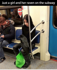 When you look up 'badass' in the dictionary:: Just a girl and her raven on the subway When you look up 'badass' in the dictionary: