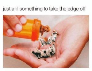 Animals, Dogs, and Memes: just a lil something to take the edge off Dog Memes Of The Day 32 Pics – Ep52 #animalmemes #dogmemes #memes #dogs - Lovely Animals World