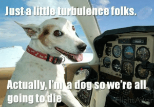 Funny Dog Memes I Top 50 of All Time I World Wide Interweb: Just a litile turbulence folks.  Actually, I a ogsowe're all  going to tie  Flight Funny Dog Memes I Top 50 of All Time I World Wide Interweb