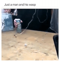 Ass, Funny, and Wonder: Just a man and his wasp Busch light tastes likes ass no wonder it $6 for a 24pk