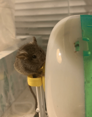 Just a mouse we adopted. Reddit, meet Frederic: Just a mouse we adopted. Reddit, meet Frederic