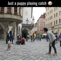 This little guy catches with his paws better than I catch with my hands 👏: Just a pupp  playing catch 48 This little guy catches with his paws better than I catch with my hands 👏