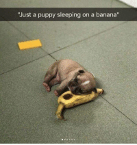"Banana, Puppy, and Sleeping: ""Just a puppy sleeping on a banana"" my name is Pup, and wen i tire, and so tu slep i muste retire, i haf no need for pillowed hed i lay on froot banana bed"