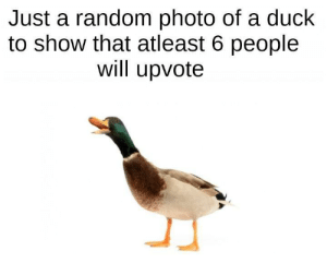 Me🦆irl: Just a random photo of a duck  to show that atleast 6 people  will upvote Me🦆irl