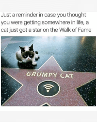 Life, Memes, and Grumpy Cat: Just a reminder in case you thought  you were getting somewhere in life, a  cat just got a star on the Walk of Fame  GRUMPY CAT 😂