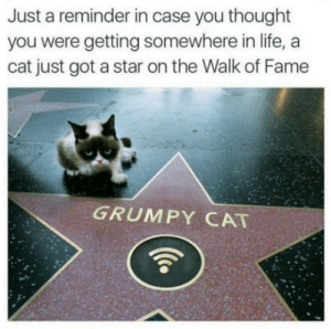 Life, Grumpy Cat, and Star: Just a reminder in case you thought  you were getting somewhere in life, a  cat just got a star on the Walk of Fame  GRUMPY CAT In case you thought you were going somewhere