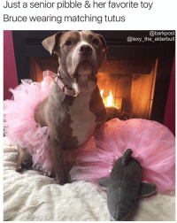 Memes, Relationship Goals, and 🤖: Just a senior pibble & her favorite toy  Bruce wearing matching tutus  @barkpost  Calexy the elderbull THIS IS NOT A DRILL 😍 showmeyourpitties Relationship goals via @lexy_the_elderbull 🐶🦈❤