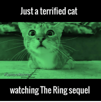 This film is clearly not for pussies 😂😂: Just a terrified cat  Samara Returns  Watching The Ring Sequel This film is clearly not for pussies 😂😂