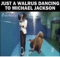 this is my spirit animal: JUST A WALRUS DANCING  TO MICHAEL JACKSON this is my spirit animal