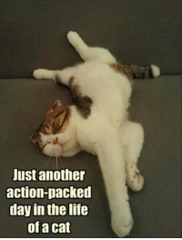 Memes, Rough, and 🤖: Just another  action-packed  day in the life  of a cat It must be rough...
