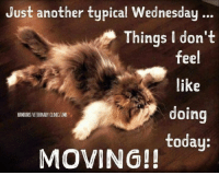 Auntie Mary brought us da Wednesday hump day funny!!!  :D: Just another typical Wednesday.  Things I don't  feel  like  doing  today:  HAMBURG VETERINARY CLINIC/JMB  MOVING!! Auntie Mary brought us da Wednesday hump day funny!!!  :D