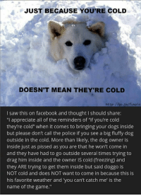 "Some doggos like the cold: JUST BECAUSE YOU'RE COLD  DOESN'T MEAN THEY'RE COLD  http://go to/funpic  I saw this on facebook and thought I should share:  ""I appreciate all of the reminders of ""if you're cold  they're cold"" when it comes to bringing your dogs inside  but please don't call the police if you see a big fluffy dog  outside in the cold. More than likely, the dog owner is  inside just as pissed as you are that he won't come in  and they have had to go outside several times trying to  drag him inside and the owner IS cold (freezing) and  they ARE trying to get them inside but said doggo is  NOT cold and does NOT want to come in because this is  his favorite weather and you can't catch me' is the  name of the game."" Some doggos like the cold"
