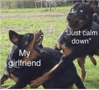 "Regret, Girlfriend, and Dog: Just calm  down""  1  girlfriend Dog regret template. Extremely versatile, invest now for high returns! via /r/MemeEconomy https://ift.tt/2r6dKgJ"