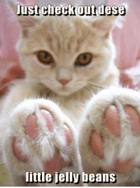 jelly bean: Just check out dese  little jelly beans