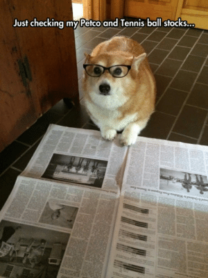 srsfunny:Financial Analyst Corgi: Just checking my Petco and Tennis ball stocks... srsfunny:Financial Analyst Corgi