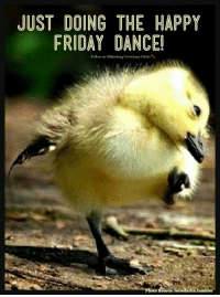 JUST DOING THE HAPPY  FRIDAY DANCE  Follow us ourg Veterinary Oinie  Ilaml  oto Source: loriedarlin.tumbler