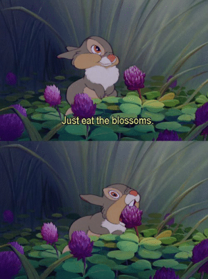 Blossoms: Just eat the blossoms