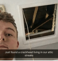 Streaks: Just found a crackhead living in our attic  streaks