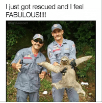 Memes, Sloth, and 🤖: just got rescued and I feel  FABULOUS!  @highfive expert @barrysbanterbus can sleep longer than a sloth but a sloth can't make great memes. Check out @barrysbanterbus today 🚌 🙌🏼