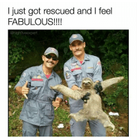 Memes, 🤖, and Fabulous: just got rescued and I feel  FABULOUS!!!!  @highfiveexpert @highfiveexpert is one of my favs! go follow rn 🔥🔥🔥