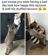 @asleepinthemuseum is a must follow 🔥. . . . raccoon raccoons follow f4f memestagram memes memesdaily positivevibes stuffedanimals animals aww haha lmao yes picoftheday photooftheday instagood and xbox gamers ctfu girls summer summer2017 dh shameless hoesbelike niggasbelike toocute: just incase you were having a bad  day look how happy this raccoon  is with his stuffed raccoon @asleepinthemuseum is a must follow 🔥. . . . raccoon raccoons follow f4f memestagram memes memesdaily positivevibes stuffedanimals animals aww haha lmao yes picoftheday photooftheday instagood and xbox gamers ctfu girls summer summer2017 dh shameless hoesbelike niggasbelike toocute